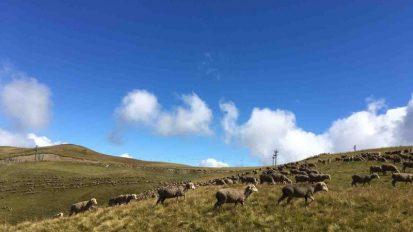 le-corbier-les-sybelles-ete-paturages-moutons